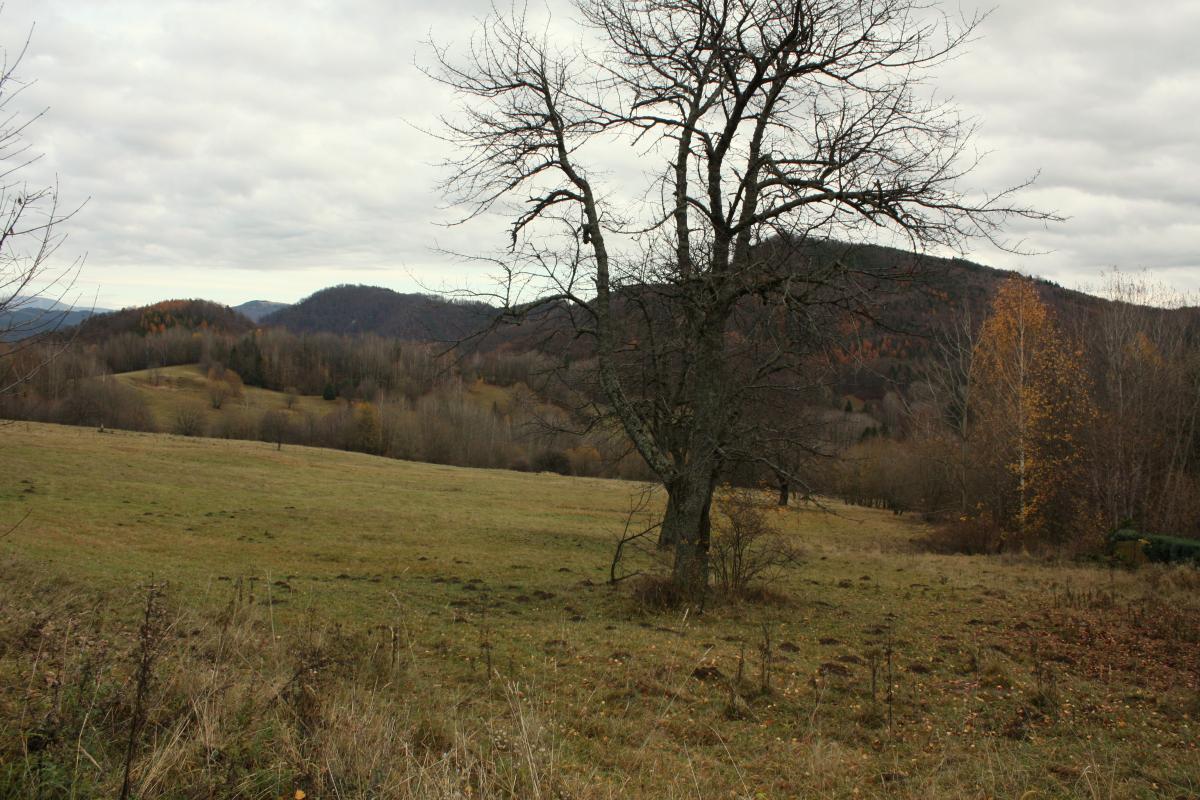 Predaj pozemkov, Kordíky, 2753 m2